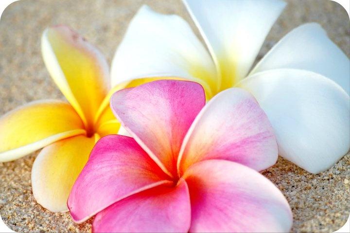mkhansens.blogspot.com  I took this in Hawaii. I <3 hawaii