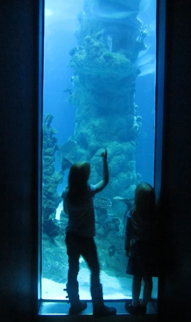 The Deep Hull. An aquarium full of sharks and other little fishes. Well recommended.