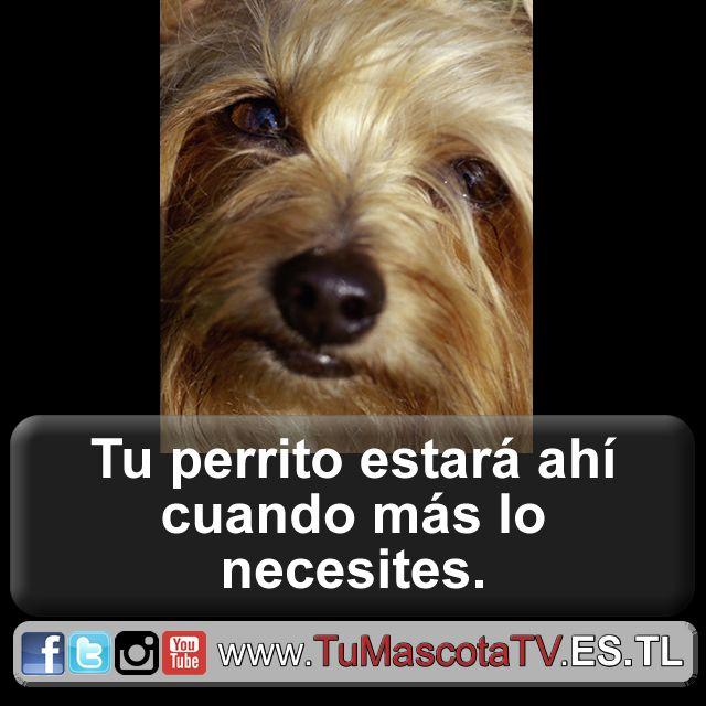 #miperro #migato #perrosygatos @EnergyDrinkRen