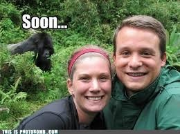 Soon...Photos Bombs, Ruins Photos, Humor Training, Business Gorilla, Backgrounds, Animal Photobomb, Humor