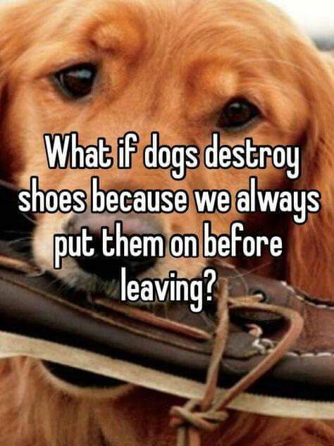 """What if dogs destroy shoes because we always put them on before leaving?"""