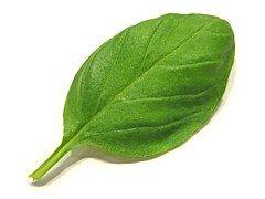 Basil, Épices, Herbes, Saison, Feuille