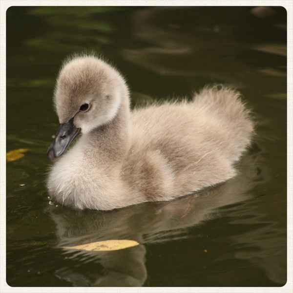 The ugly duckling (ugly?...)