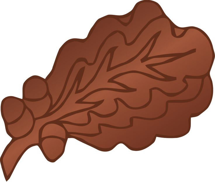 Oak leaf cluster - Wikipedia