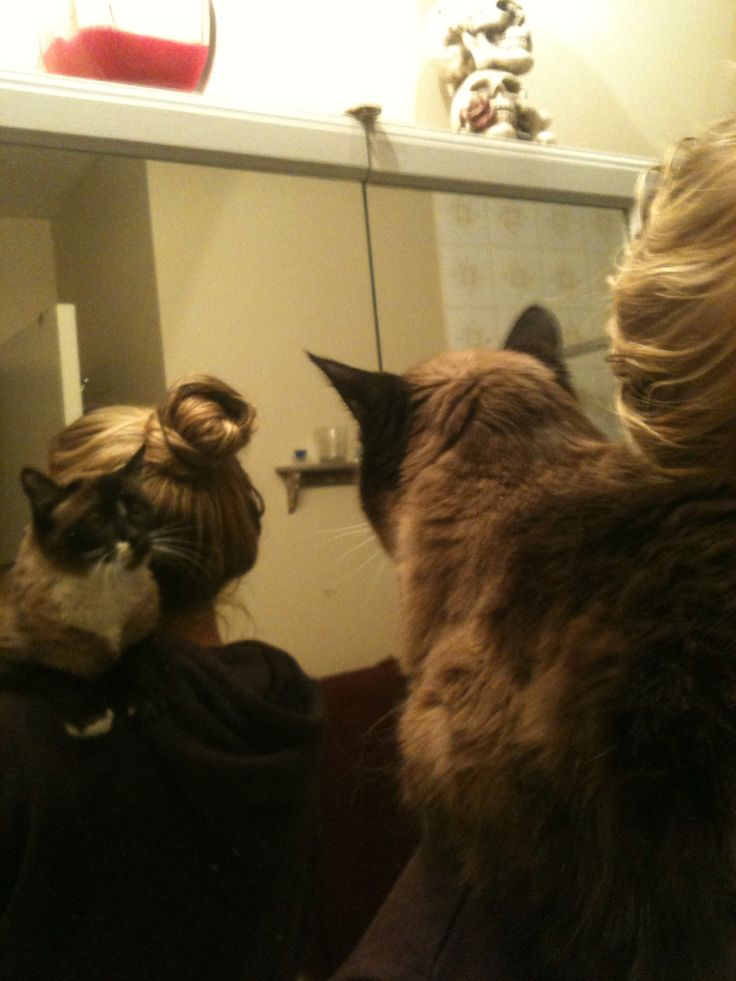 Nermal's reflection