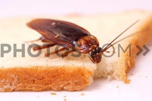 Rimedi naturali per tenere lontano gli insetti: la guida