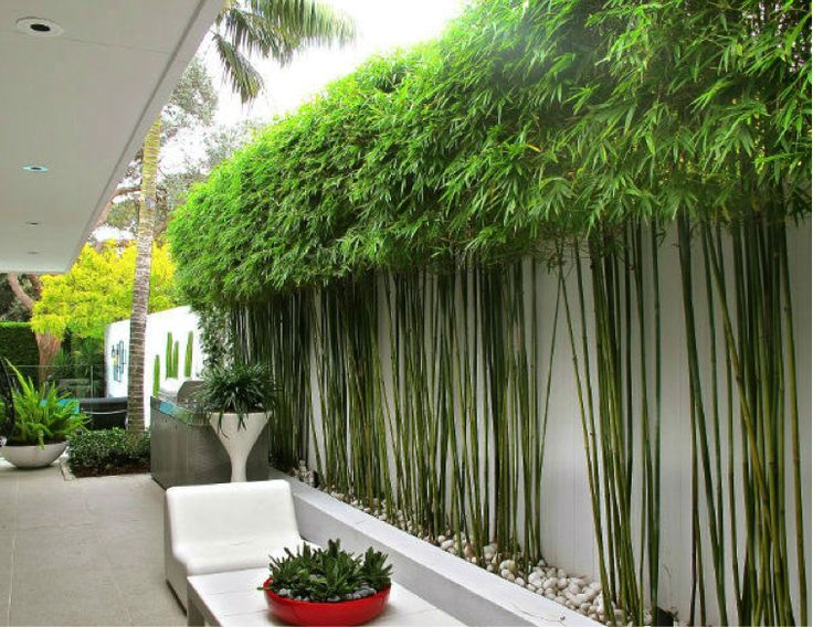 modern clean bamboo landscape design - Google Search