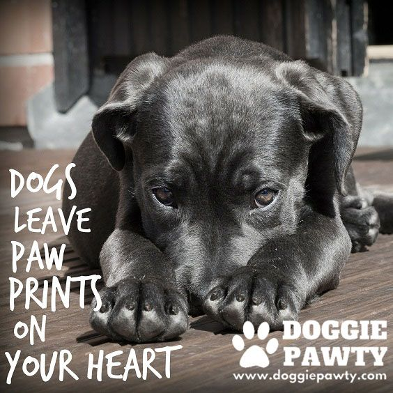 The 31 best dog training tips images on pinterest dog training dogs leave paw prints on your heart do you agree http solutioingenieria Images