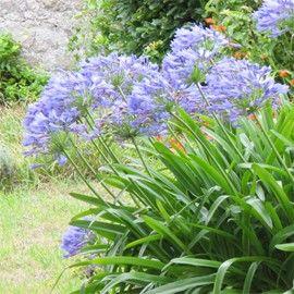 17 meilleures id es propos de caract ristiques de jardin for Ou trouver de la terre de jardin