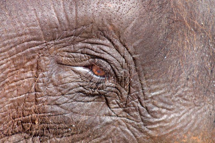 Elephant Orphanage, Pinawella Sri Lanka