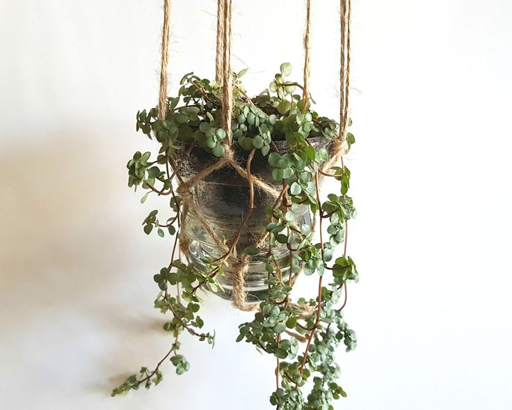 Glass Insulator Hanging Plant These hanging planters are made from old glass insulators you can still see on vintage hydro poles. Hang them from your ceiling or from a nail! Includes a plant (either a succulent or a leaf/vine).  Available for in-store pick up only (so you can pick exactly which cool plant fits your style!)  Grown and supplied by Terra Velta in Ottawa, Ontario.