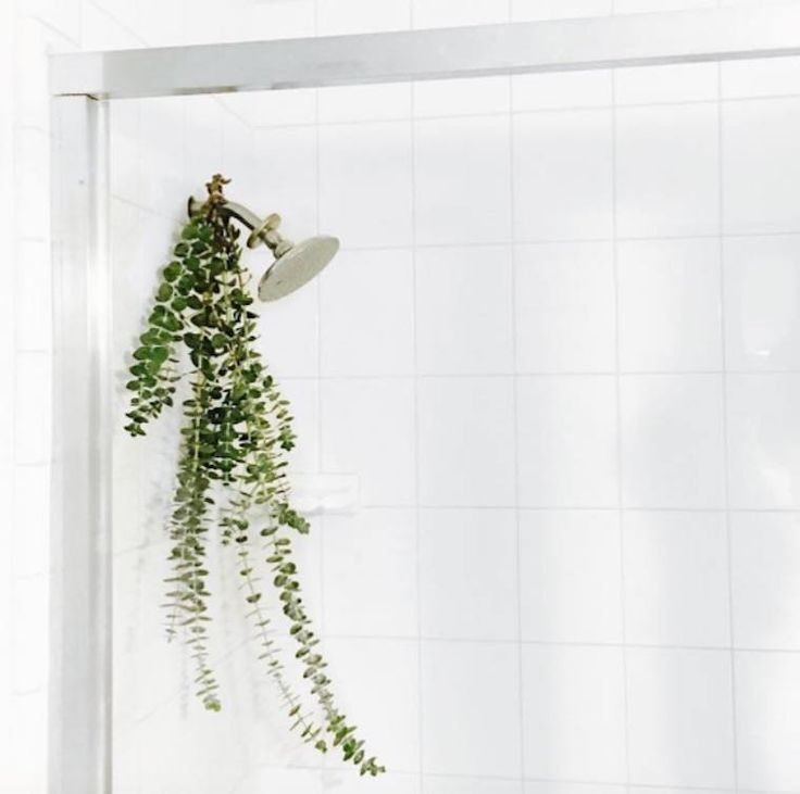 Eucalyptus You can instantly transform your bath into a spa by hanging these fresh-cut stems from your shower head. You can usually buy a few sprigs from your local farmer's market or Whole Foods. The heat from the shower activates and releases the refreshing essential oils, so breathe deep for an invigorating, sinus-clearing experience.