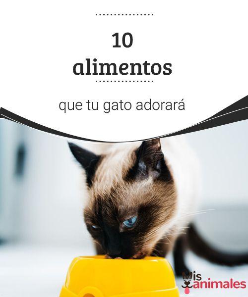 10 alimentos que tu gato adorará  Conoce qué alimentos que tu gato adorará comer, puedes darle en pequeñas proporciones y sin desequilibrar su dieta para hacerle mucho más feliz. #alimentación #felina #feliz #comer