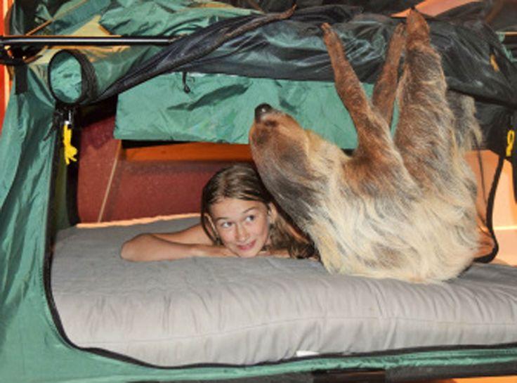Centro de vida selvagem oferece 'pernoite' com preguiças nos EUA