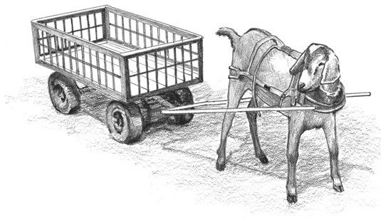 The ideal harness goat is energetic, intelligent, and friendly. #goatvet likes these steps on how to train you goat to pull a cart