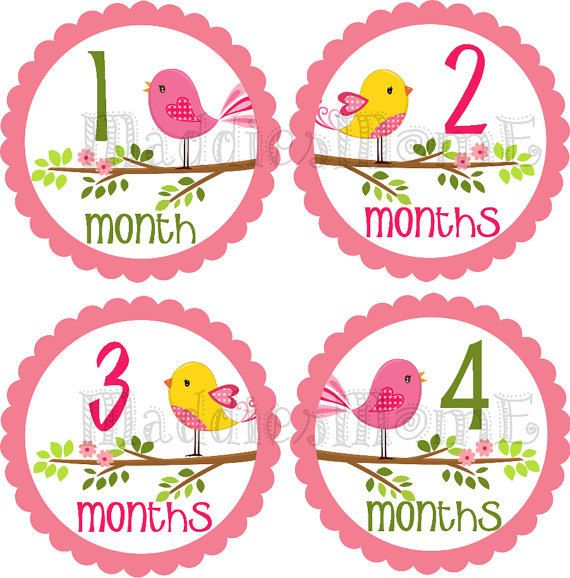 Instant Download Diy Printable Pdf Baby Girl Monthly