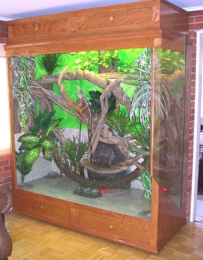 Showing what a habitat would look like for an arboreal animal. This is what I & 29 best Beereu0027s New Home images on Pinterest | Reptile cage ... azcodes.com