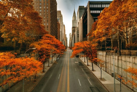 How about New York in the fall? #FallFoliage (Thanks for pinning, @jkmanta): Favorite Places, Big Apples, New York Cities, Beautiful Places, Fallwint Bliss, York States, Photo, Steve Kelley, Newyork