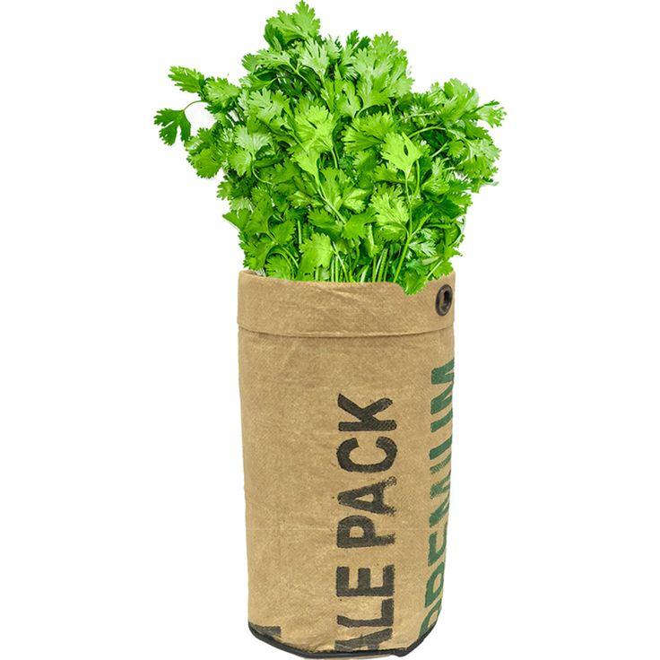 Urban Agriculture Organic Herb Grow Kit | Cilantro                                                                                                                                                                                 Más