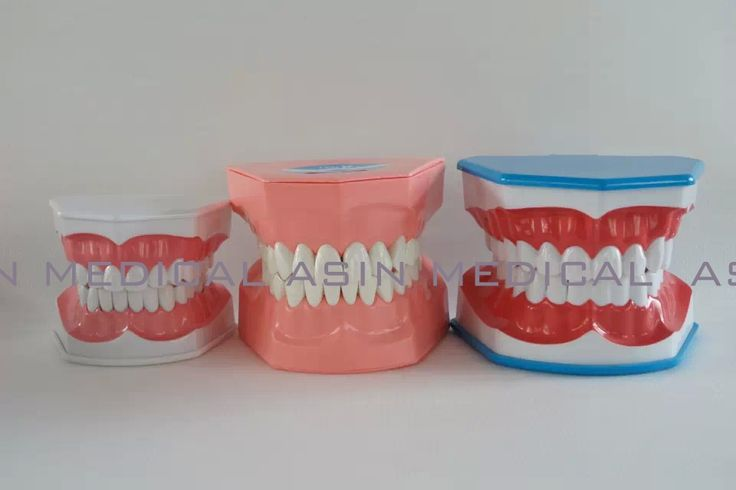 32.88$  Watch here - http://alir0n.shopchina.info/go.php?t=32718326491 - 2016 new three size & colors Teeth Brushing Model children Dentist student learning model 32.88$ #buychinaproducts