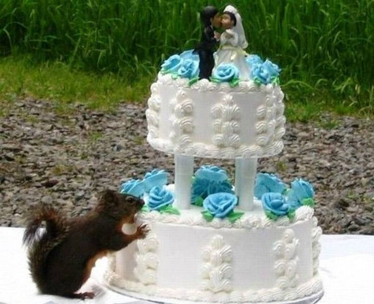свадебный торт демотиватор