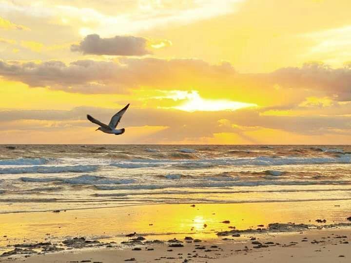 Nuestras #playasvirgenes te están esperando conservando el tiempo en un bucle infinito de paz y tranquilidad. Ven a #menorca somos #vallsrentacar #isla #paraiso #mediterraneo #medioambiente #retiro #vacaciones