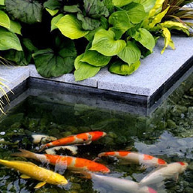 467 best sunlight shadows images on pinterest water for Koi pond maintenance near me