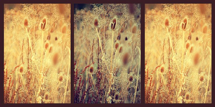 Golden Shades Of Wild Grass. Triptych by Jenny Rainbow  Golden Shades of Wild Grass. Triptych by Jenny Rainbow.  The Healing Environment  #JennyRainbowFineArtPhotography #BeigeColor #WallArt #Nature #HomeDecor