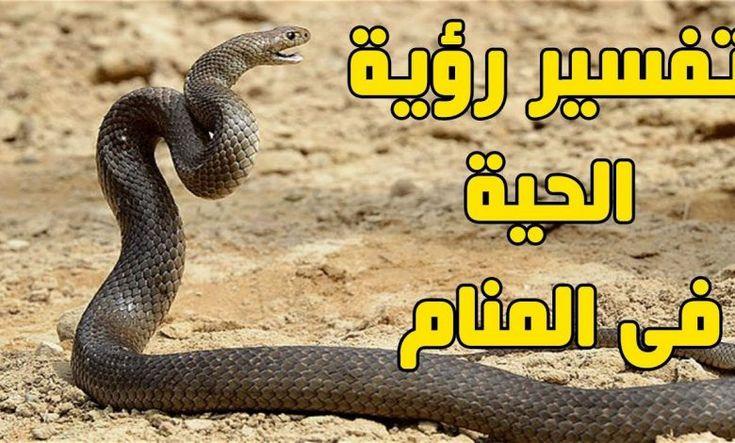 تفسير حلم الحية في المنام Snake Animals Mma