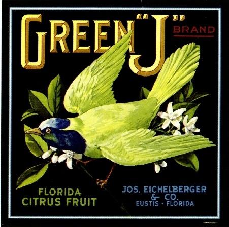 Eustis Florida Green J Bird Orange Citrus Fruit Crate Label Art Print | eBay