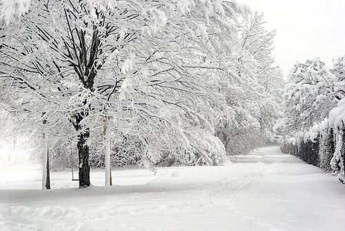 lovely snow picture