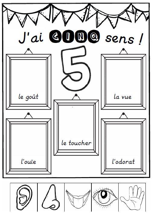 sciences, questionner le monde, 5 sens, découverte du monde, handicap, aveugle, cécité, sourd, surdité, toucher, goût, odorat, langue des signes