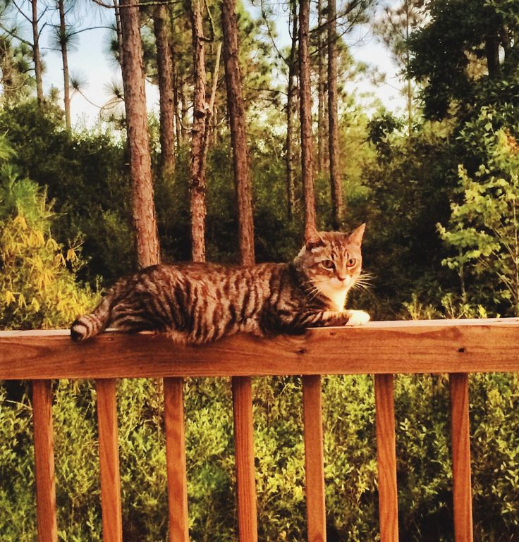 Mr Big.  In all his glory.  He loves our back yard.  He loves fishing.  He is a beach kitty.