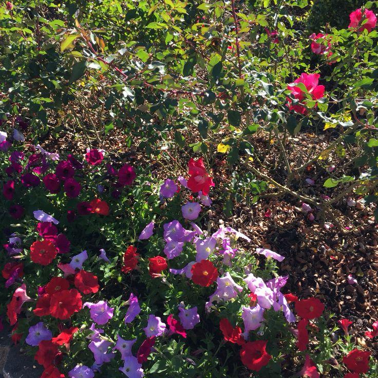Toowoomba Street Garden May