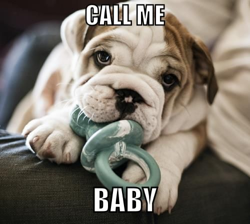Call me baby - bulldog