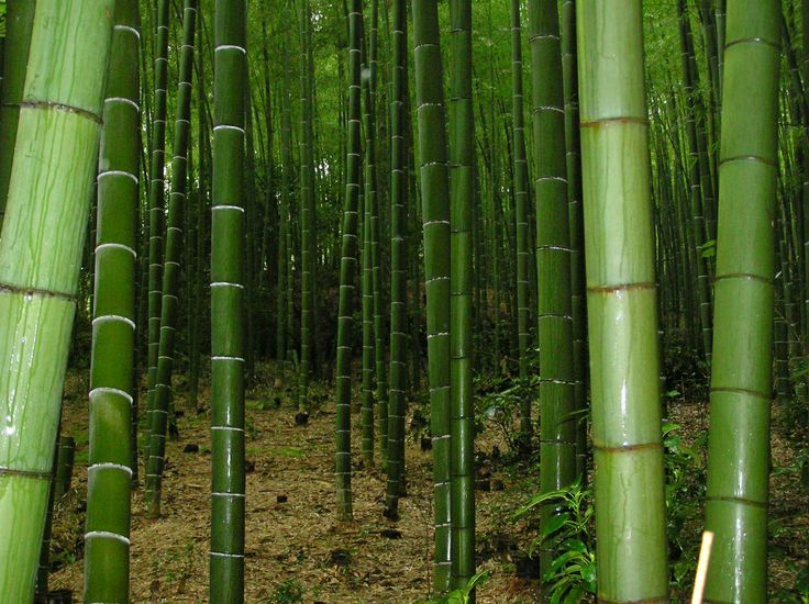 Where To Find Bamboo Poles ~ Best bamboo poles images on pinterest