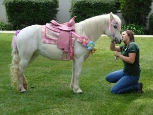 """Ponies for parties, carriage rides, miniature horse rides Southern California,""""FOR THAT PRINCESS Party YOU ARE DREAMING OF"""" ;)"""