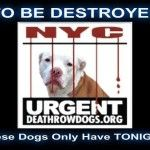 NO LIST FOR SEPT 5, 2016  SHARE ALL THE SUPER URGENT AND URGENT PETS YOU CAN PLEASE!!!