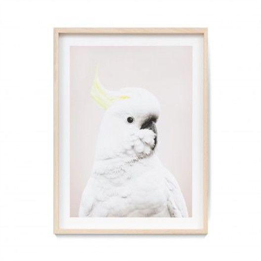 Good Looking Cockatoo | London