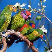 Boutique de jouets pour perroquets perruches par TheJungleToysStore
