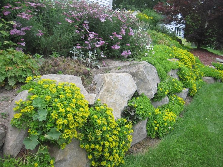 Drought resistant ground cover ground cover sedums are for Low maintenance ground cover ideas