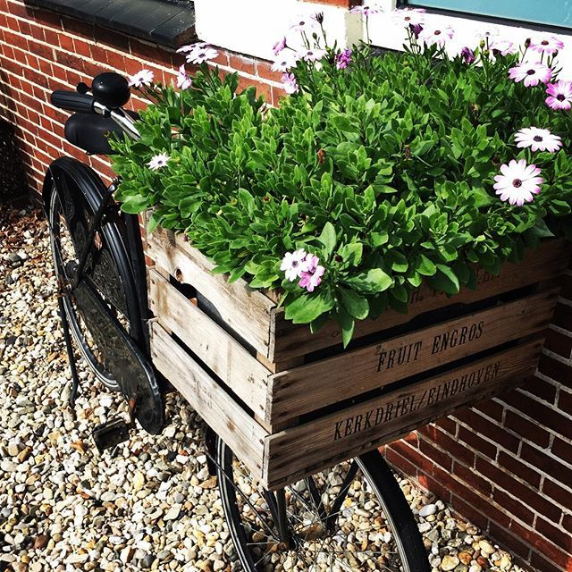 Loved this #bike at my friends house! Great #decoration idea with the #flowery #plants like that!  #bike #cycle #omafiets #dutchbike #withawkwardfootbreak #bikestagram #bikesofinstagram #flowers #flowerpotbike #dutch #netherlands #dutchbikes #bikegoals