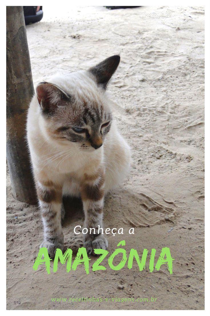 Conheça a Amazonia, uma viagem surpreendente pelo Brasil, que brasileiros não costumam fazer