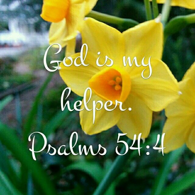 God is my helper Psalm 54:4  How is God helping you today?  #quiet #mentalhealth #still #stillness #contemplation #center #centred #silence #life #peace #peaceful #help #God #flower #yellow