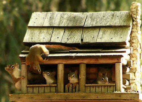 Secret Squirrel Protect Your Nuts Patch: 76 Best Ideas About Bird Feeders & Houses On Pinterest