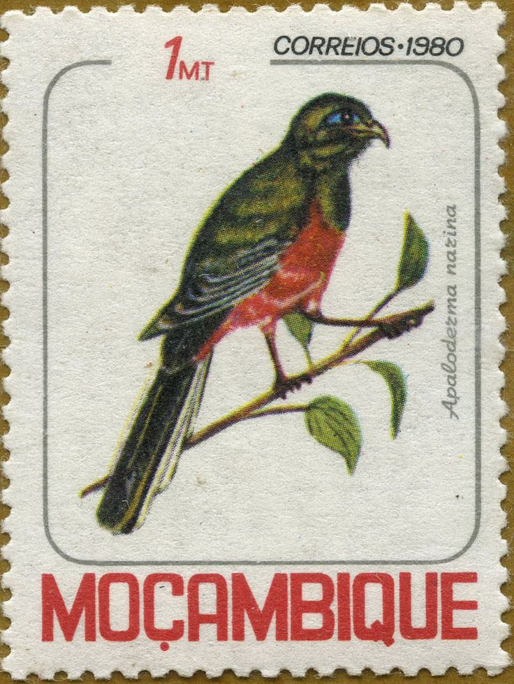 Aves de Mozambique Apaloderma narina Surucuá de narina 30/07/80 Mozambique