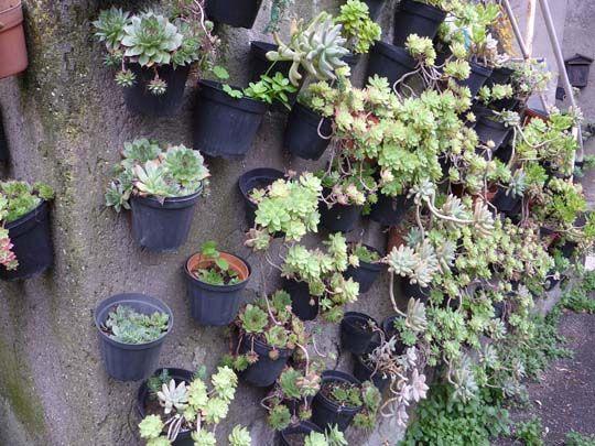 Oltre 25 fantastiche idee su Giardino di piante grasse su Pinterest  Piante ...