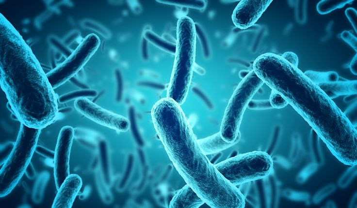 7 recommandations pour un microbiote en santé