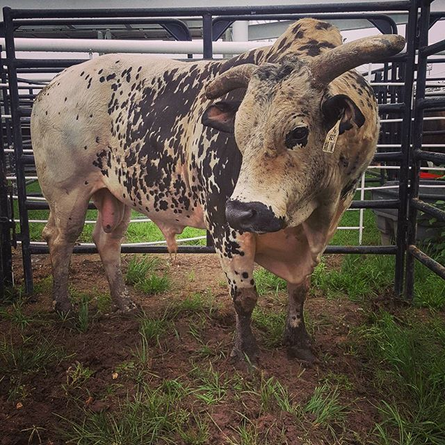 He has arrived! #PBRDecatur @teampbr