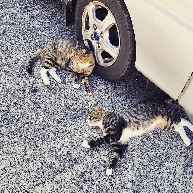 癒し... 漁港で生きる猫たち Cats living in the fishing port.